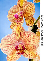 two orchids over a pop blue background