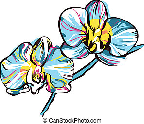 two orchids with yellow center and blue petals - a two...