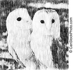 two owls friends