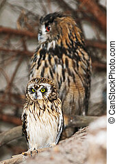 Two owls sitting on a branch.