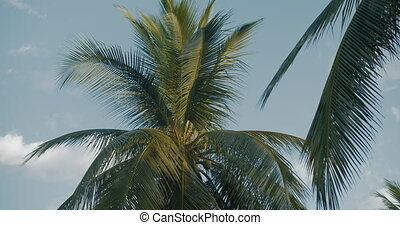 Two palm trees against blue sky with clouds