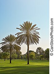 two palm trees in the park Dubai