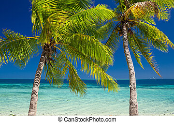 Two palm trees over blue lagoon in Fiji