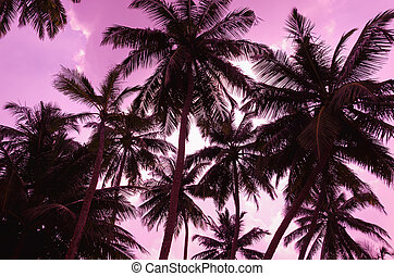Two palm trees silhouette on sunset beach