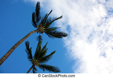 Two palm trees swaying in tropical breeze