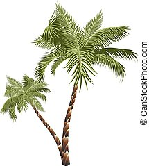 Two Palm Trees - Two colorful palm trees illustration on...