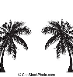 Two palm trees. Vector