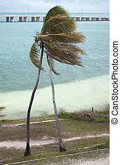 Two palms bending in the wind at Bahia Honda state park