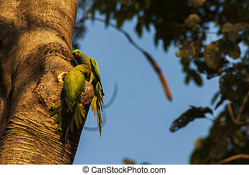 Two Parakeets in a beautiful light