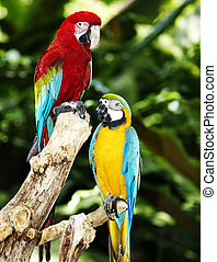 Two parrot in green rainforest. Outdoor.