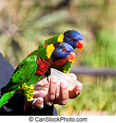Two parrots eating from a cup in hand in the sun in a aviary