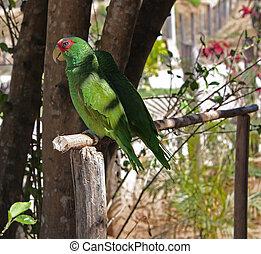 Two parrots.