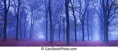 Two paths in a dark and foggy forest, The Netherlands - A...