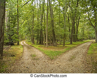 Two Paths - This is a shot of two hiking trails at Allaire...