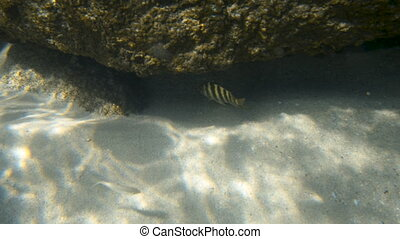 Two patterned fish swimming under a rock formation - A slow...