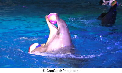 Two peforming dolfins