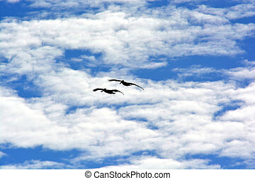 Two pelican silhouette