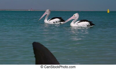 Two pelicans on the ocean