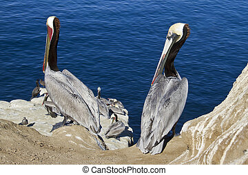 two pelicans sitting on the rocks
