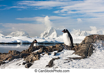 Two penguins dreaming