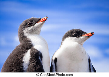 two penguins in Antarctica - two penguins resting on the...