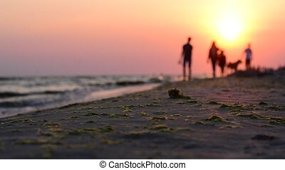 Two people walking with a dog on the coast at sunset