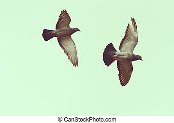 two pigeons over the sky