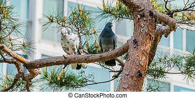 Two pigeons perched on a branch in a tree