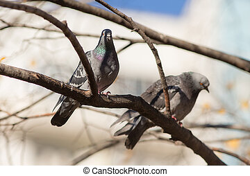two pigeons sitting on a tree