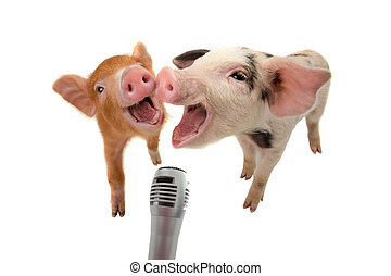 two piglet are singing into the microphone