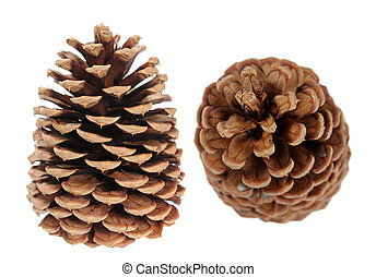two pine cones isolated on white