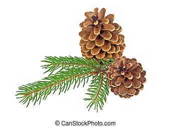 Two pine cones with branch on a white background