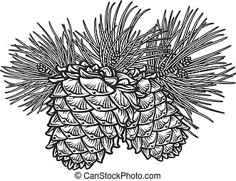Two pine cones with needles - Vector hand drawn black and ...