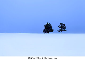 Two pine trees in the snow