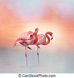 Two Pink flamingos at sunset