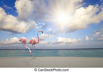 Two pink flamingos on the sandy beach by the blue sea under the sky with the sun through clouds
