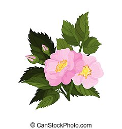 Two pink flowers with two buds on a white background. Vector illustration..