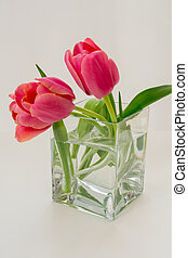 Two pink tulips in a cubic glass vase on a white background