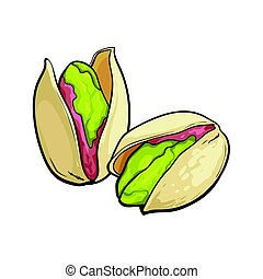 Two pistachio nuts, hand drawn isolated sketch style vector illustration