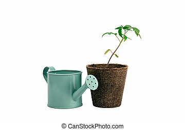 two plant of tomato and watering can isolated on white