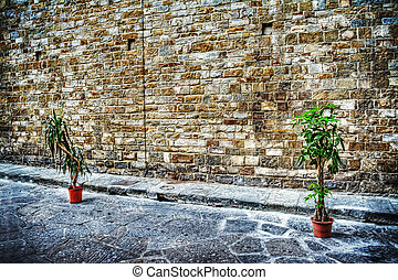 two plants on the edge of the street