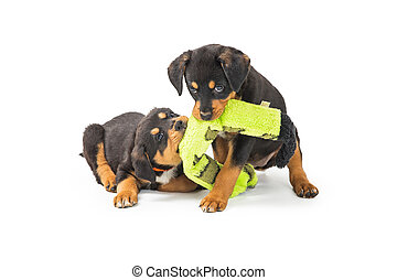 Two Playful Puppies With Stuffed Toy