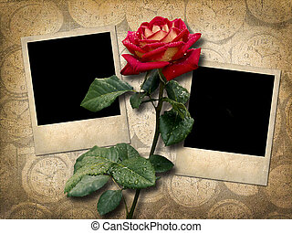 Two Polaroid-style photo  with red rose