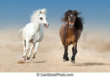 Two Pony run in desert