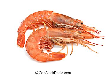 two prawns, isolated on white background