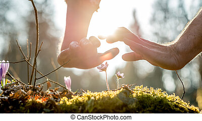 Two protective hands above fragile wild flowers