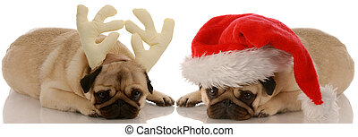 two pug dogs dressed up as santa and rudolph