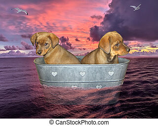Two puppies drifting on sea in washtub