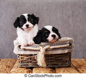 two puppies in a wicker basket