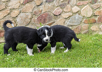 two puppies in the meadow